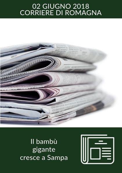 Il bambù gigante cresce a Sampa – Corriere di Romagna