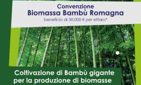 convezione biomassa bambù